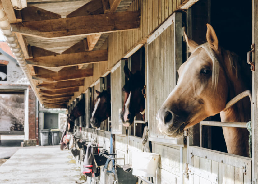 A horse stable